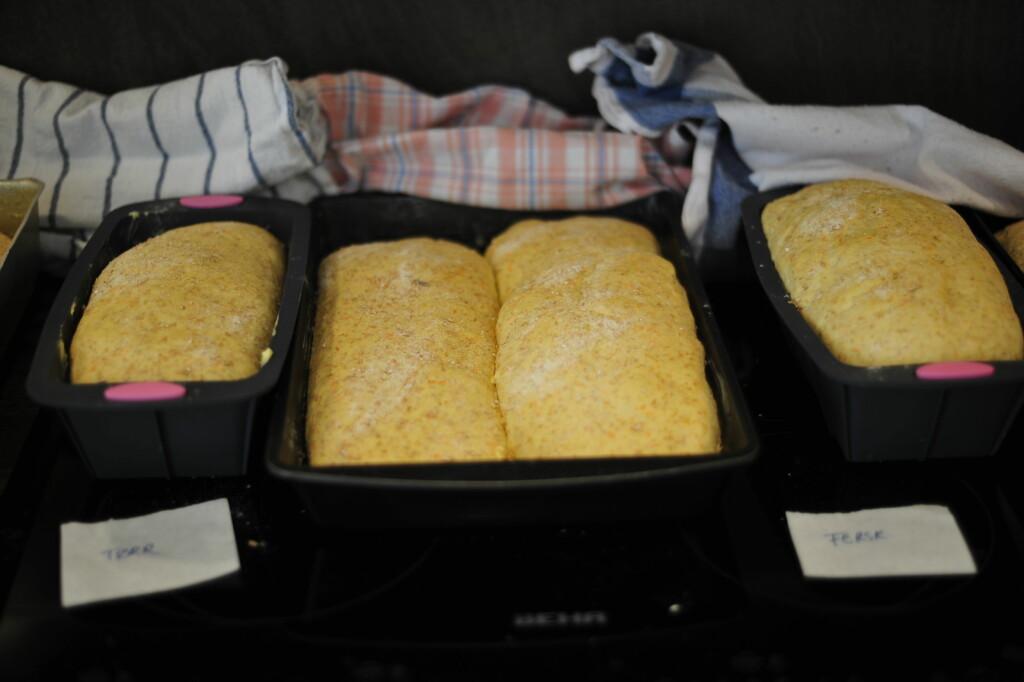 Etter en halv times etterheving, som er det anbefalte i oppskriften, ser brødene slik ut. Brødene med tørrgjær helt til venstre, og de med fersk gjær til høyre. Foto: Kristin Sørdal