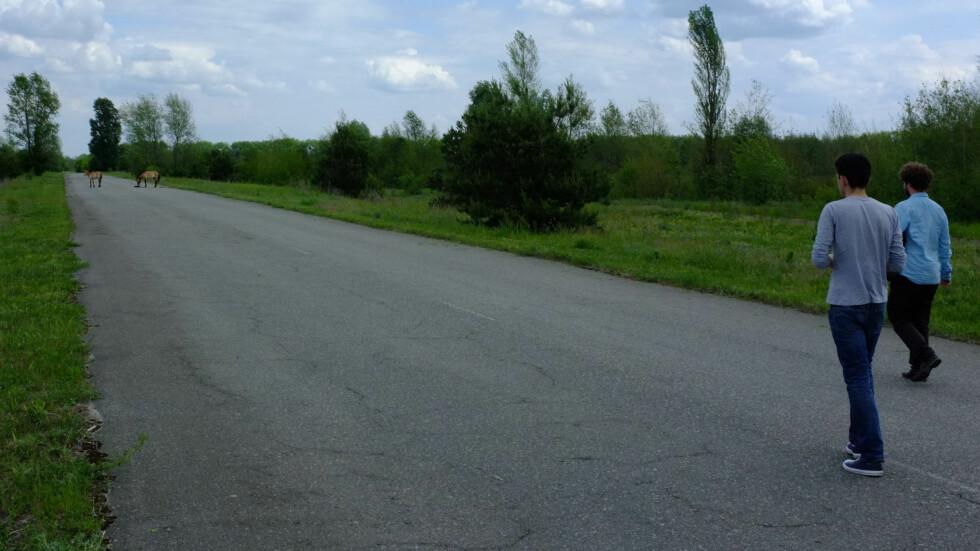 Ville hester løper rundt i sonen. Vi var så heldige at vi møtte dem på vei til Pripjat.  Foto: Ole Petter Baugerød Stokke