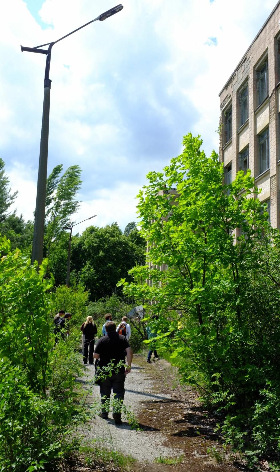 GRØNT: Byen Pripjat ble satt opp i forbindelse med Tsjernobyl-kraftverket, og huset 49.000 folk. Nå har naturen tatt over den tidligere betongjungelen.  Foto: Ole Petter Baugerød Stokke