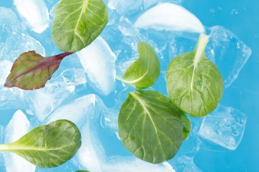 Legg slappe salatblader i isvann i et par minutter, så blir de sprø og fine igjen.  Foto: PantherMedia / Maksim Shebeko