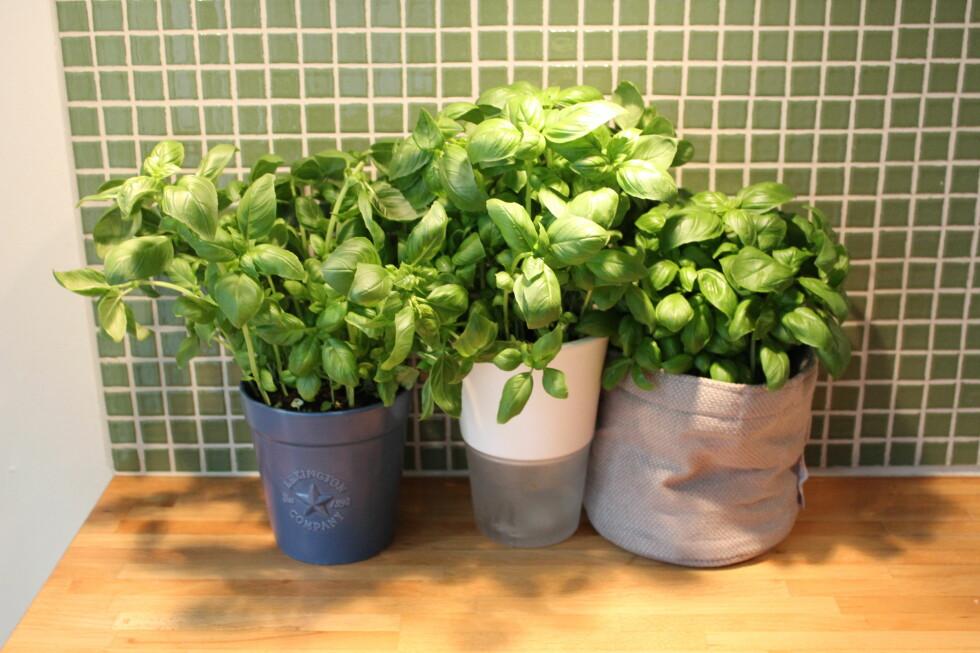 FØR: Bleievanning, Eva Solo selvvanning og Grow-in-selvvanningspotte fra Mester Grønn, den dagen vi plantet dem. Foto: Elisabeth Dalseg