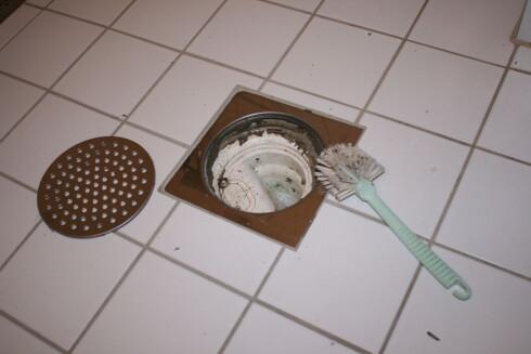 UNNGÅ SØLVKRE: For å unngå at sølvkre krabber rundt kan det blant annet være lurt å rense sluket på badet ofte.  Foto: Elisabeth Dalseg