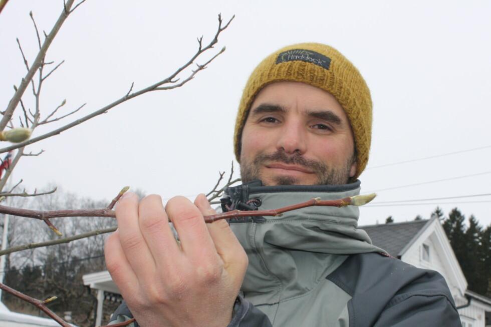 EN ADVARSEL: Her viser gartneren Karsten Raddatz at når knoppene ser slik ut betyr det at de er klar for knoppsprett. Da må du ikke beskjære planten. Dette er Magnolia, en vårblomstrende plante.  Foto: Mie Andersen