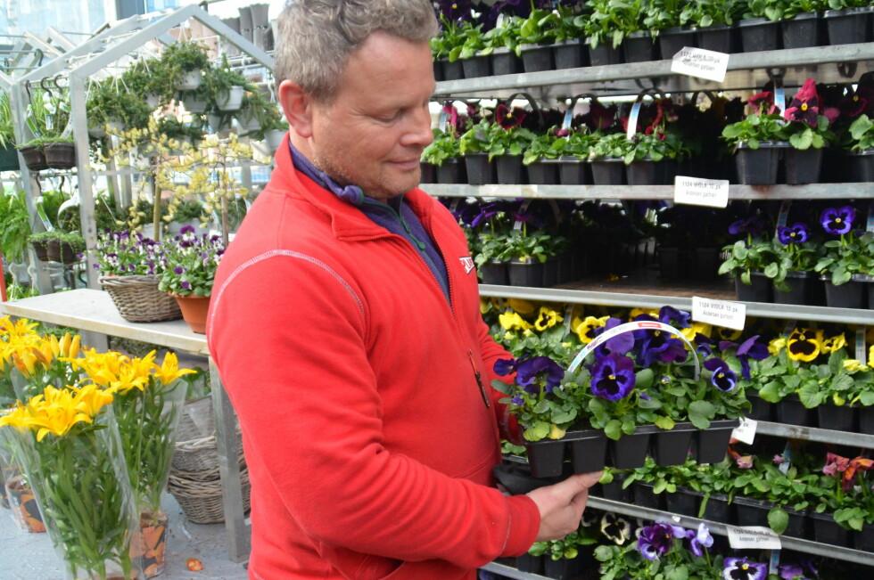 APRILBLOMST: Helge Andersen ved Plantasjen gir sine tips og råd til hvordan du kan plante ute allerede nå. Han kaller stemorsblomsten aprilblomst nummer èn. Foto: MARTHE IHLE