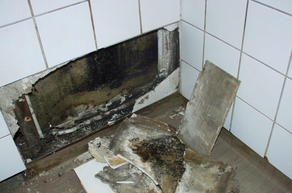 Sopp og råteangrep er ikke dekket av alle forsikringer. Får du hjelp om boligen din blir skadet, eller må du ordne opp i skadene på egen hånd? Foto: Rekkehus