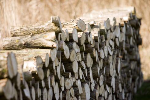 Det er en myte at bjørk brenner best. Mest varme får du om du velger blandingsved.  Foto: Colourbox.com