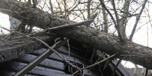 image: Huseiere kan få ansvaret for skader etter stormen