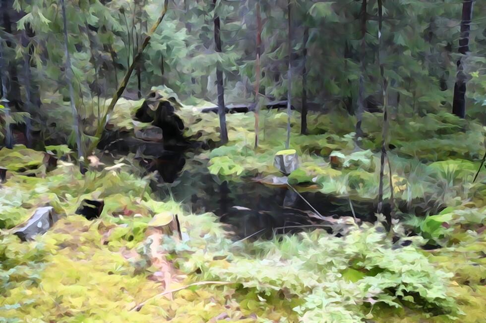 Akvarell-effekten i kameraet gir kunstneriske resultater.