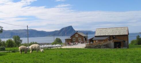 Hakallegarden er Norges beste veikro