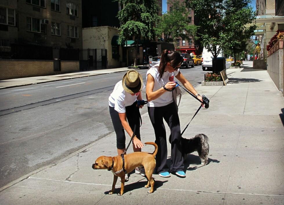 Hundepassere. Foto: Privat/Hueno Solsona og Mayliss Blix