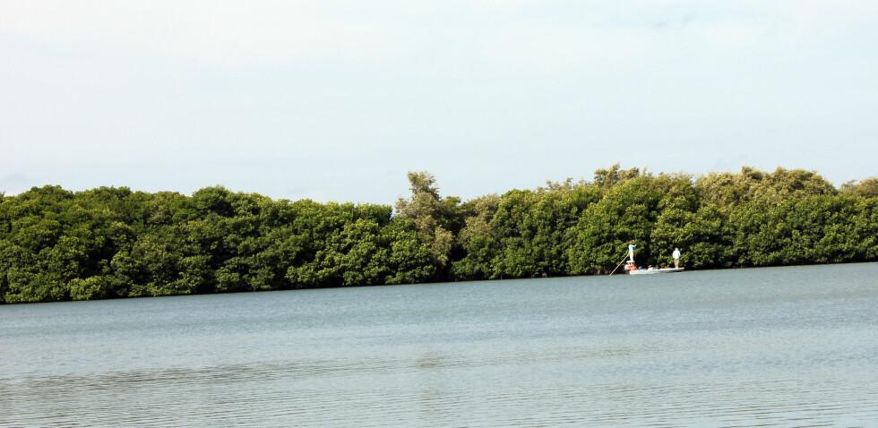 Det er populært å fiske langs mangroveskogen. Foto: Silje Ulveseth