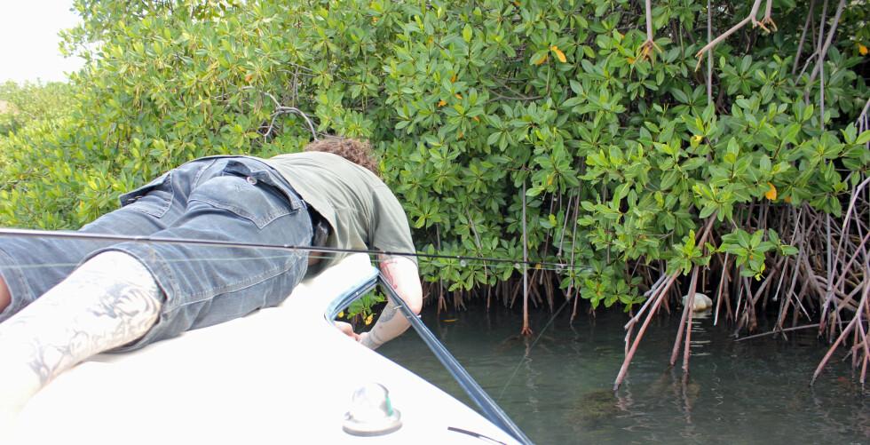 Thor Olav Moen satte fiskekroken fast i mangroveskogen ... Foto: Silje Ulveseth
