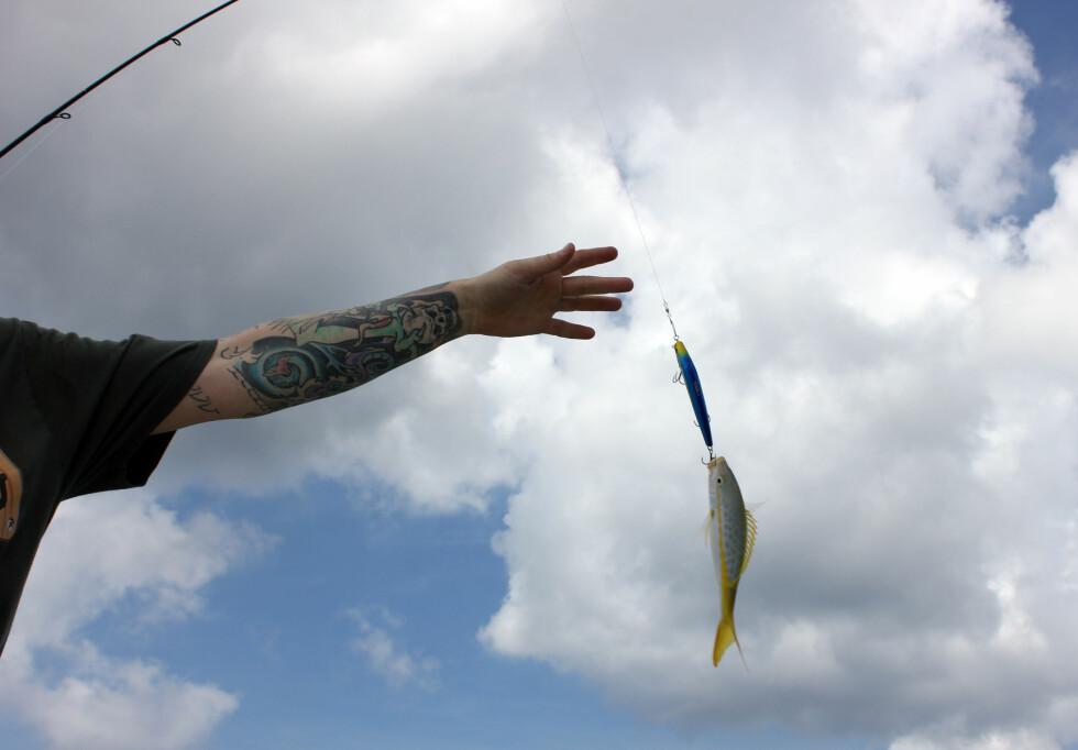 Her er den, yellowtail snapper! Så vidt større en fiskekroken. Foto: Silje Ulveseth