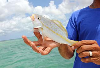 Slik er det å fiske i Karibien