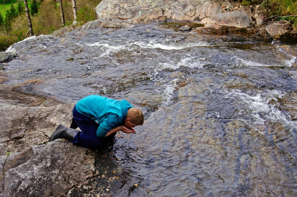 VENT NÅ LITT: Drikk ikke vann direkte fra naturen i områder med mye smågnagere, fugler eller beitedyr. Dette gjelder særlig fra små vann, elver og bekker, råder fhi.no. Foto: Colourbox.com