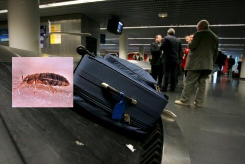 Usikker på om du har fått med deg mer enn du ønsker i bagasjen? Rist klærene godt, og gi gjerne kofferten en tur i badstu eller fryseboksen. Foto: Colourbox/Wikimedia