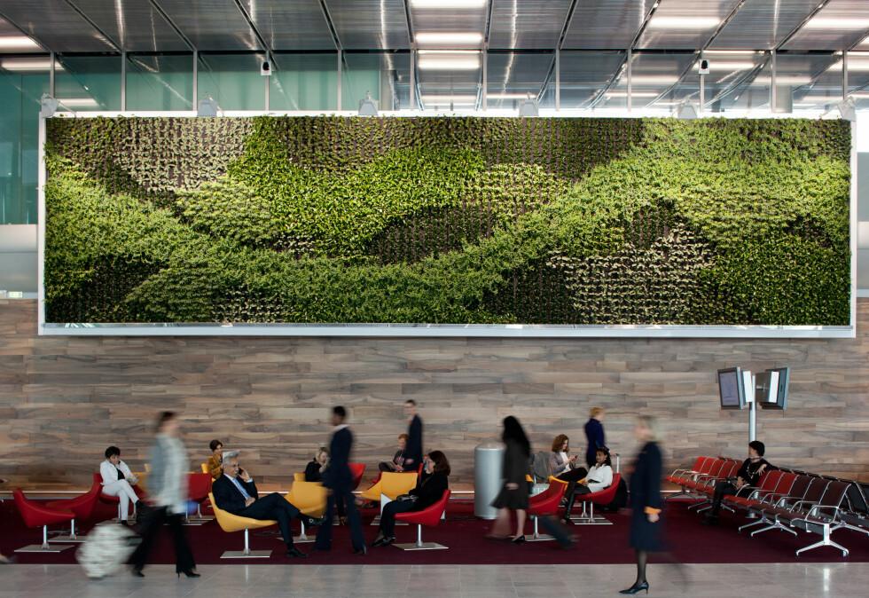 Lekker gressvegg gir en botanisk følelse. Foto: www.seignettelafontan.com