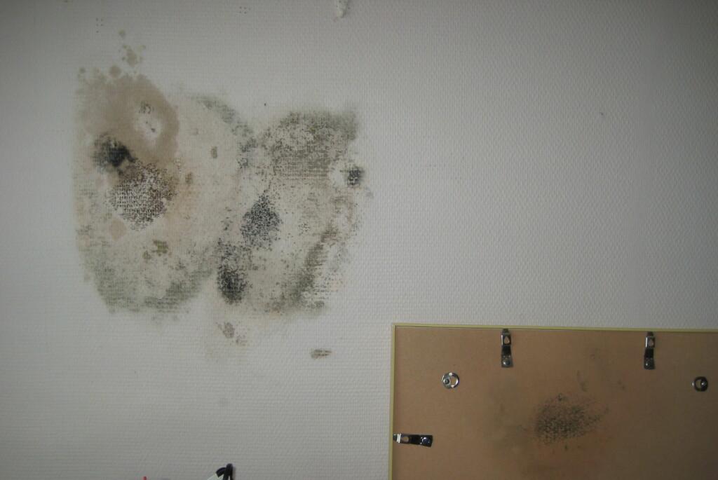 <b>Så ille kan det gå:</b> Her har det utvilket seg muggsopp bak et bilde som har hengt på en yttervegg. Foto: Kai Gustavsen