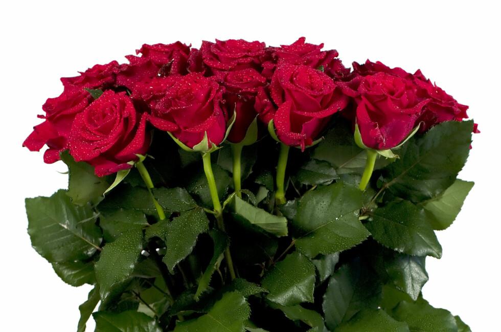 SMART TRIKS: Når du kjøper eller får blomster, vil du vel at de skal holde lengst mulig? Foto: Colourbox