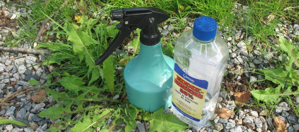 VI TESTER HJEMMESNEKRA UGRESSMIDDEL: Eddikvann mot ugress funker som bare det. Foto: KRISTIN SØRDAL