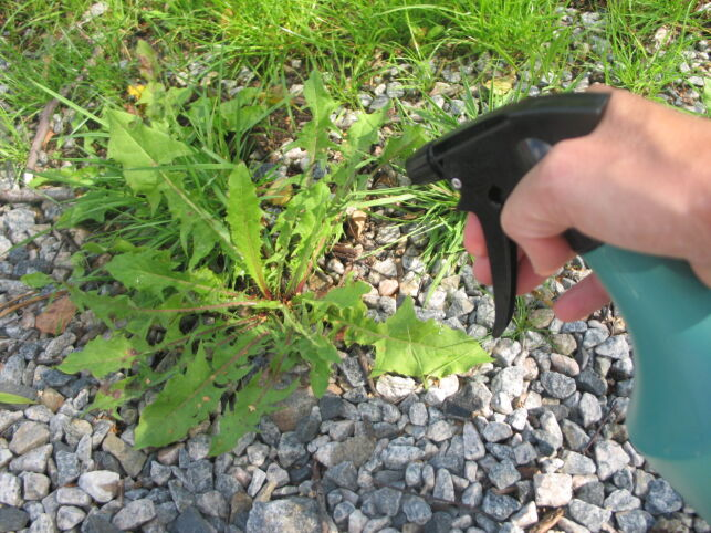 image: Funker som bare rakkern: Eddikvann mot ugress