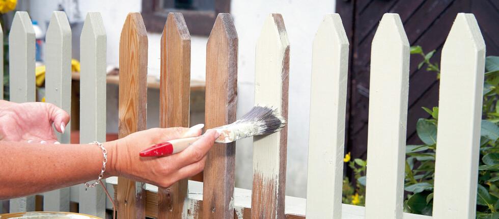 Du kan fint male trykkimpregnert treverk, bare du sørger for å behandle det riktig først.  Foto: Kristian Owren / IFi.no