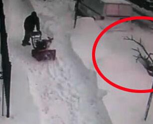 image: Her blir tyven tatt på fersken