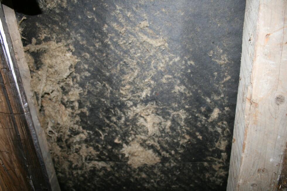 Den gamle isolasjonen smuldrer opp, og har vært et eldorado for småkryp i flere år.  Foto: Elisabeth Dalseg