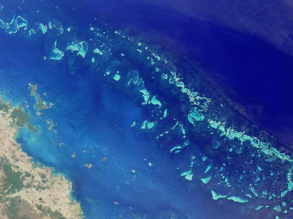 Great Barrier Reef sett fra en satelitt. Foto: NASA