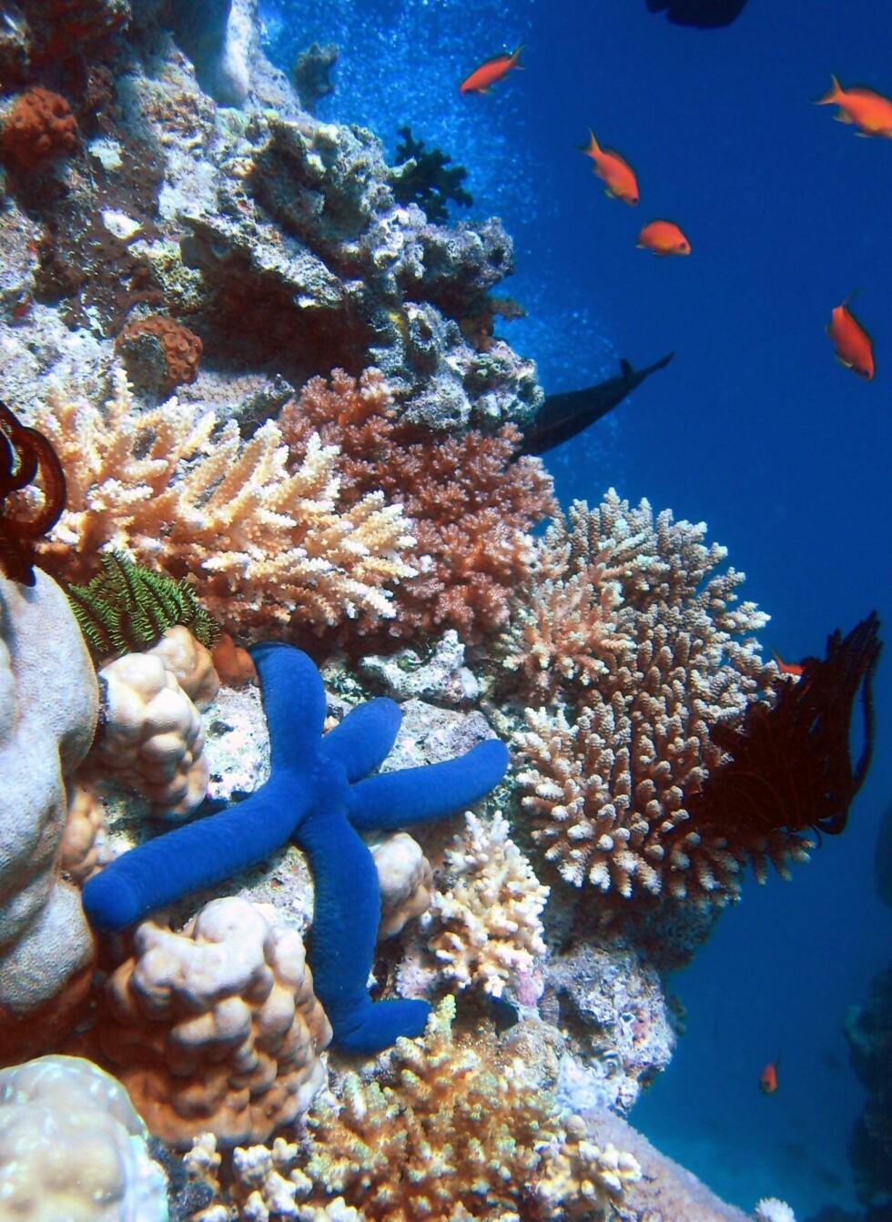 Yrende dyreliv i Great Barrier Reef. Foto: Richard Ling