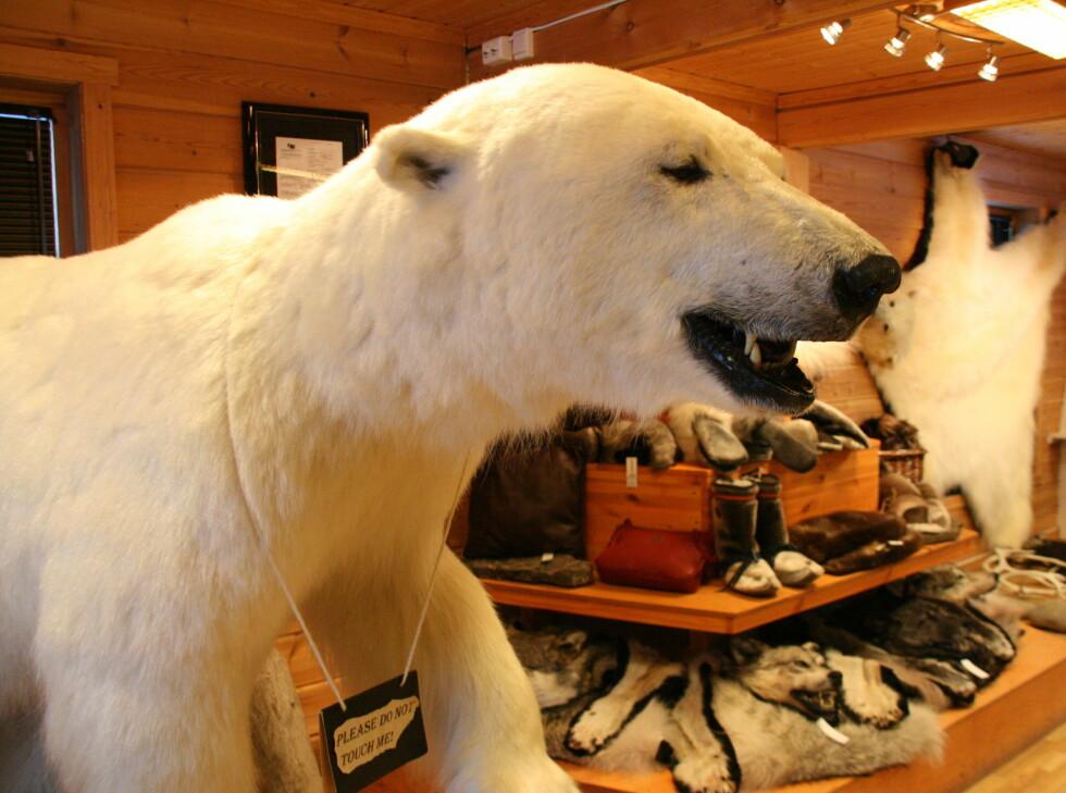Isbjørn til salgs