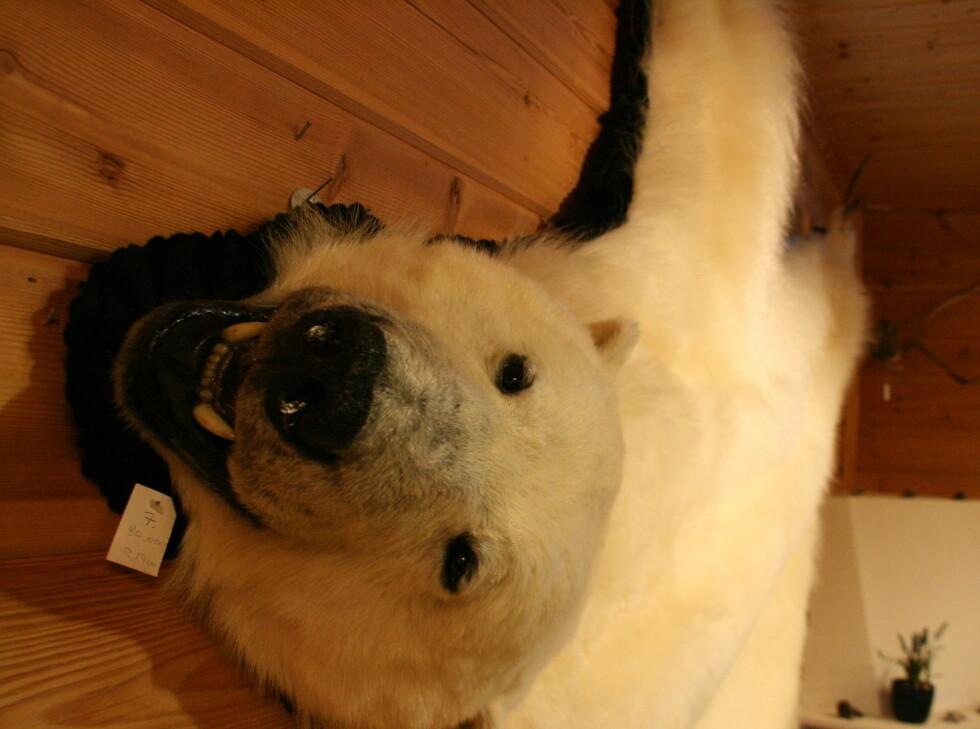 Isbjørnfell: 80.000 kroner hos Skinnboden