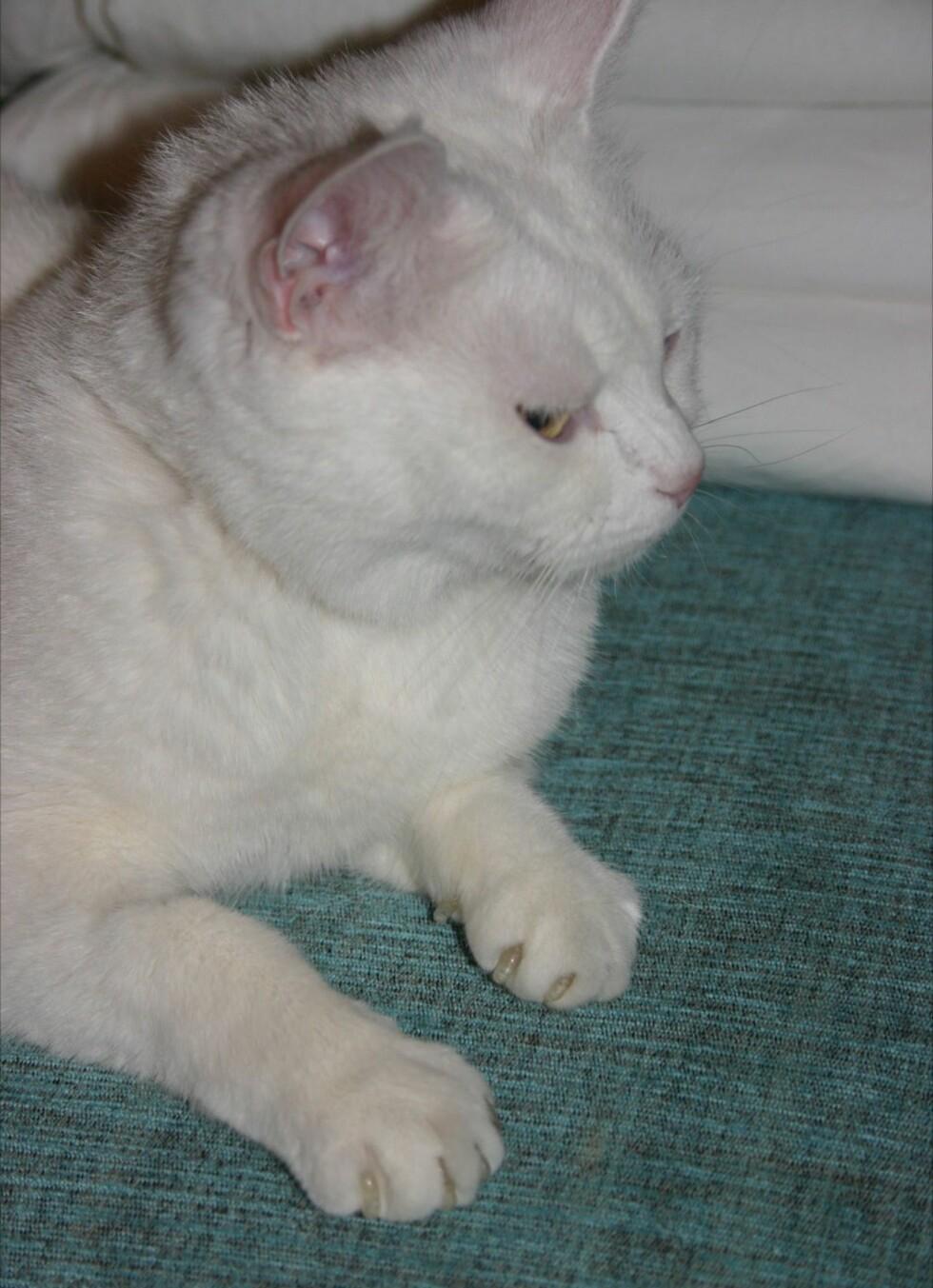 Tilsynelatende skeptisk, men likevel en fornøyd katt. Foto: Henriette Fuhr Blix