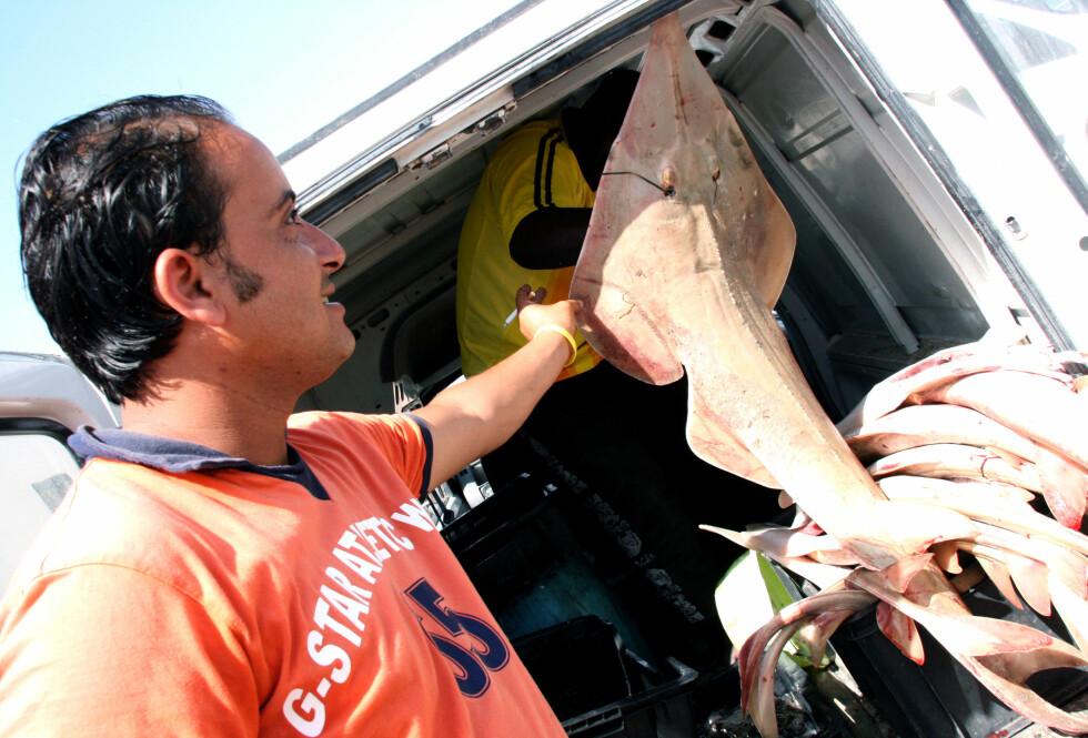 En god dag for denne fiskeren. Foto: Kim Jansson