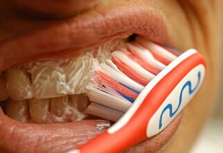 Puss tennene før frokost