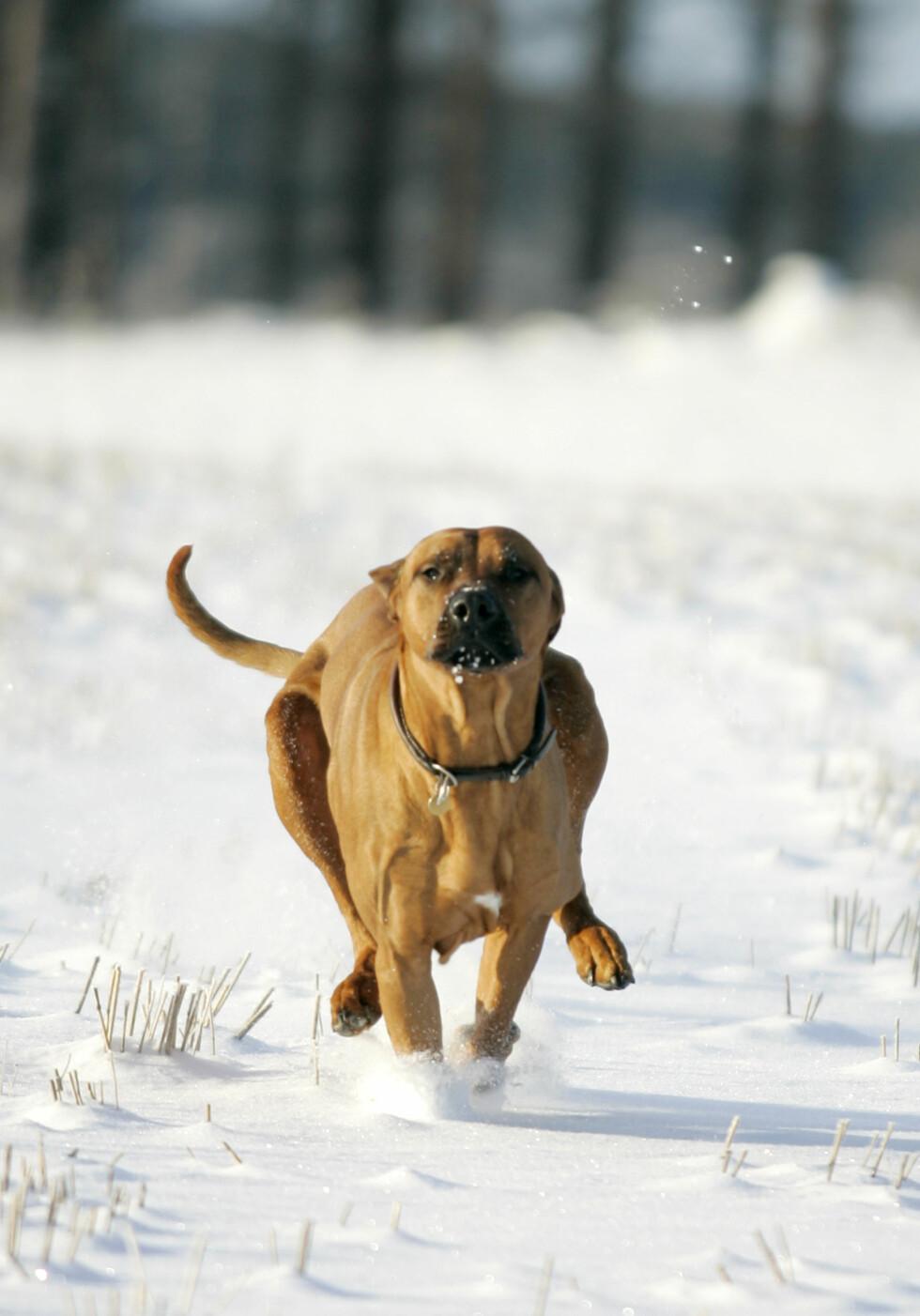 Sol og masse snø betyr at du kan knipse med svært korte lukkertid og dermed fryse et actionbilde. Foto: Colourbox.com