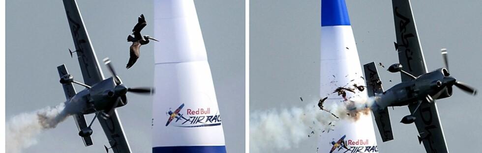 Her kolliderer et propellfly med en stork. Foto: SAS