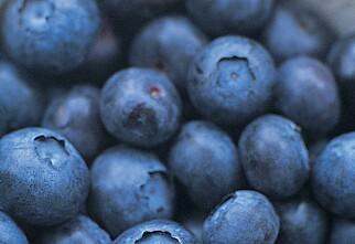 Blåbærjuice gjør hjernen friskere