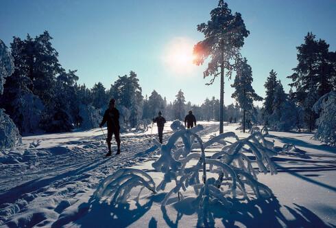Oslomarka er et eldorado for friluftsfolket, og eksotisk for turistene. Foto: VisitOSLO/Odd Stiansen