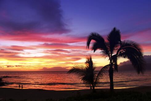 Fra Maui. Palmestrand - ja, solnedgang - ja. Foto: Andre Bogaert