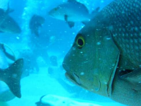 Undervannsopplevelser står i fokus i Great Barrier Reef. Foto: Frode Klevstul