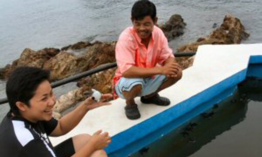 På Gemia Island Resort får skilpaddeungene spise seg store og sterke før de slippes ut i havet. Foto: Stine Okkelmo