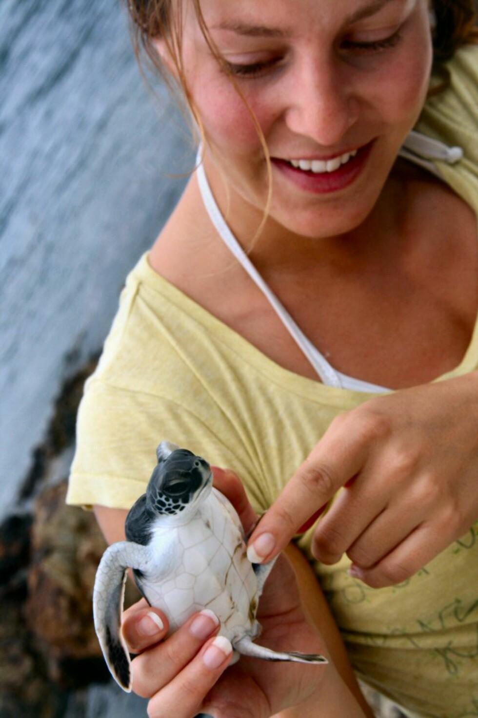 Nærkontakt med en skilpaddeunge som har vokst seg litt større, og som snart er klar for livet i havet. Foto: Mikko Tuomas Risto Ala-Peijari