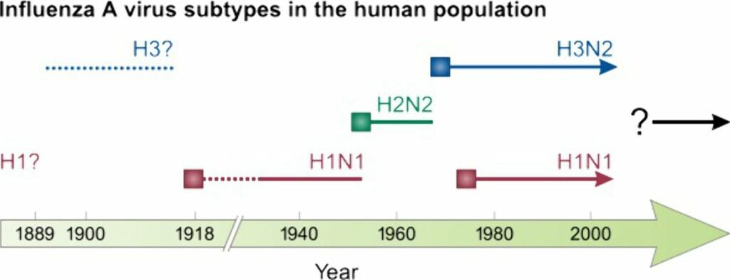 image: Svineinfluensaens hemmelige historie
