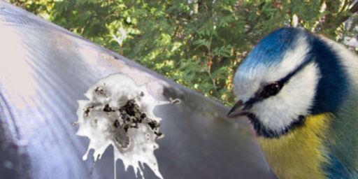 image: Fuglehygge - ikke fugledass
