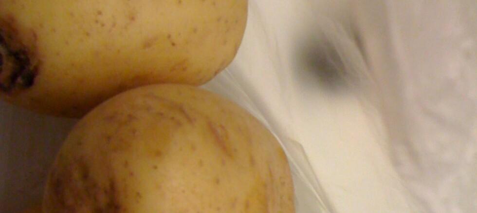 Alle var skadet: Vi plukket sant å si ut de peneste potetene i løsvekt på Rema, men så ikke veldig nøye på dem: Alle hadde skader. Foto: Jon Erland Madsen