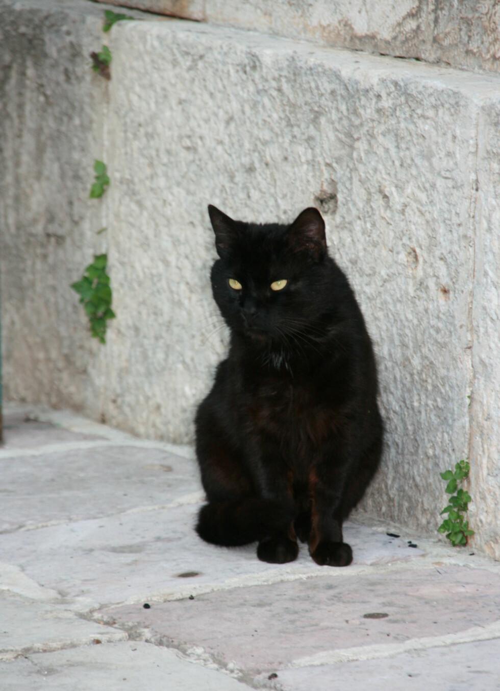 En svart katt i gamlebyen lar seg ikke affisere av fotograferende turister. Den har nok posert før. Foto: Stine Okkelmo