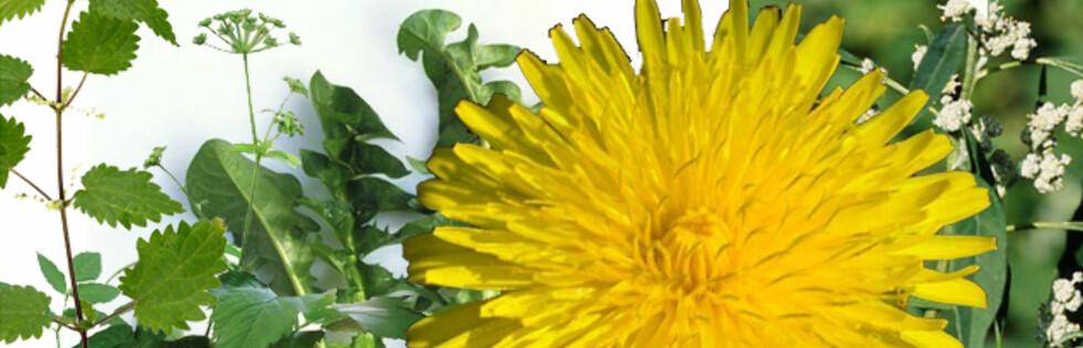 HAVENS DELIKATESSER: Har du noensinne prøvd ugress i maten? Foto: Montasje: Science Photo Library