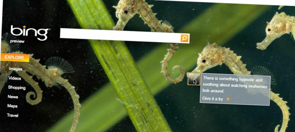 Bing er Microsofts nye søketjeneste og bytter frontbilde hver dag.