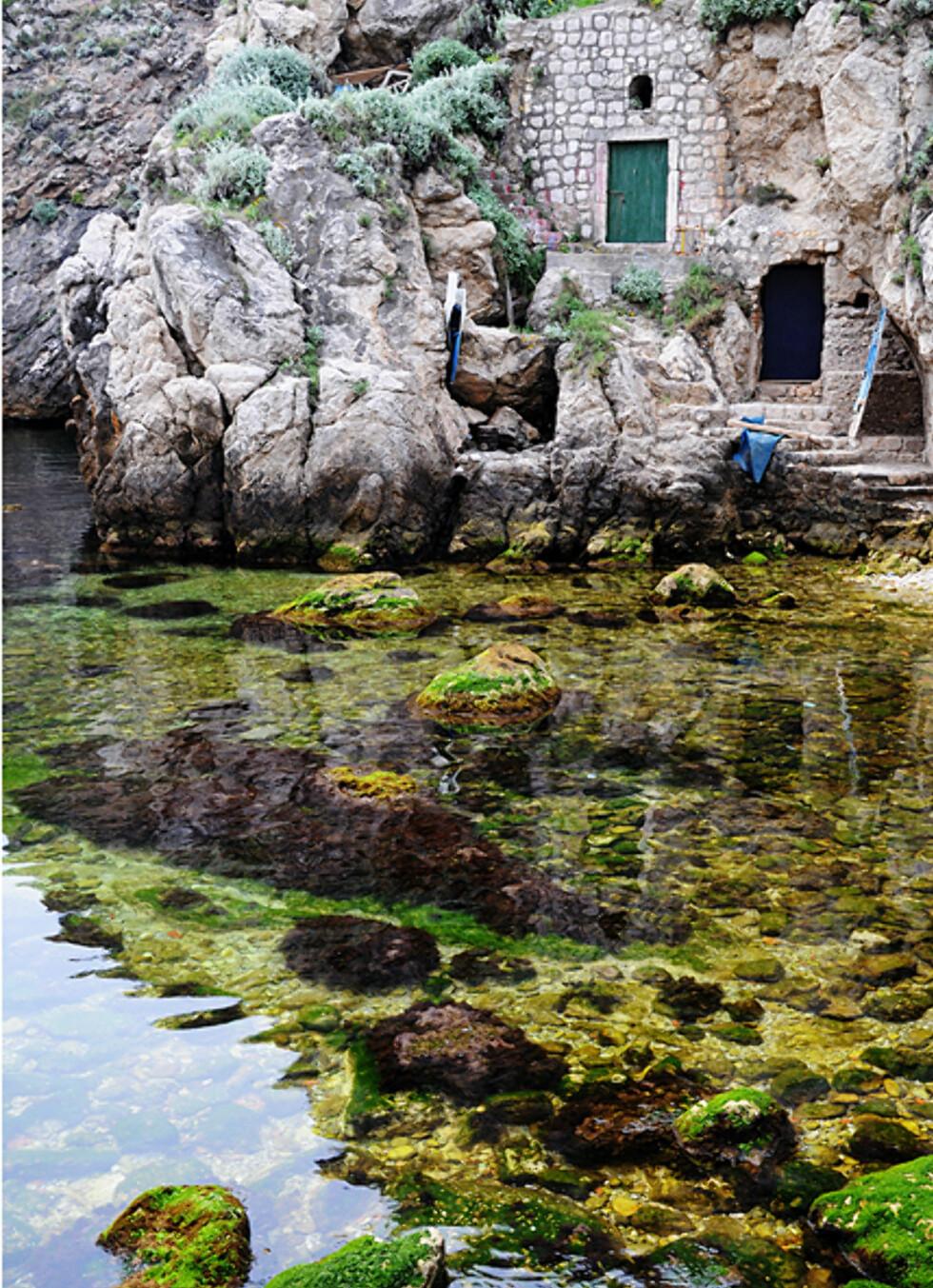 Føling i fjæra. Som ellers i Kroatia er vannet krystallklart også ved Dubrovnik. Foto: Hans Kristian Krogh-Hanssen